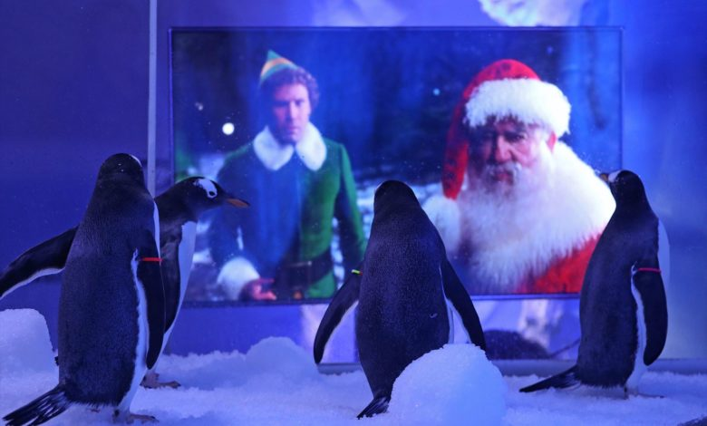 ペンギンにクリスマス映像